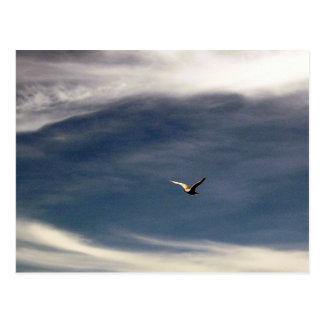 Carte postale de ciel de mouette
