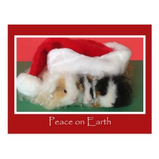 Carte postale de cobaye de Noël de Cavy