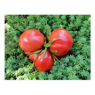 Carte postale de coeur de tomate