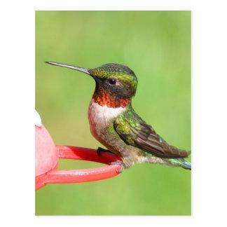 Carte postale de colibri