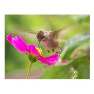 Carte postale de colibri de bébé