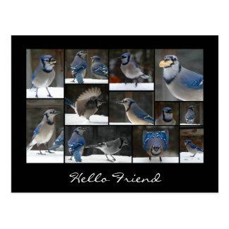 Carte postale de collage de geai bleu