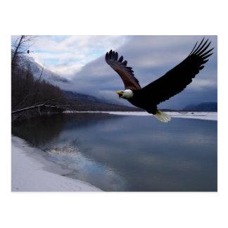 Carte postale de conserve de Chilkat Eagle