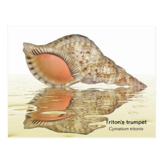 Carte postale de coquillage de Triton