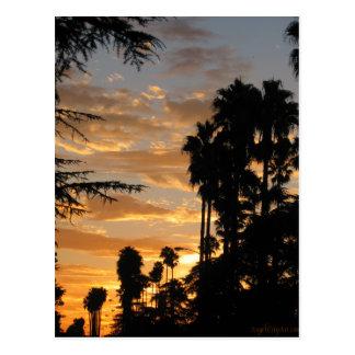 Carte postale de coucher du soleil de palmier de