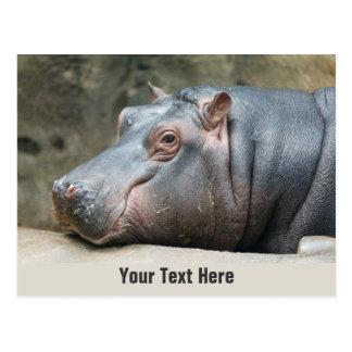 Carte postale de coutume d'hippopotame