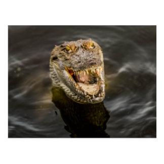 Carte postale de crocodile