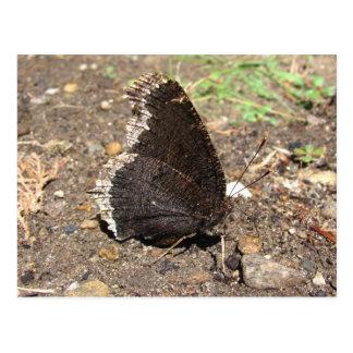 Carte postale de ~ de papillon de manteau de deuil