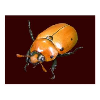 Carte postale de ~ de scarabée de vigne