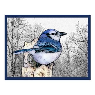 Carte postale de dessin de geai bleu
