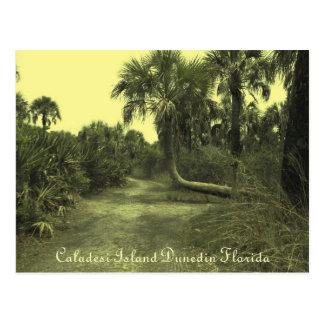 Carte postale de Dunedin la Floride d'île de