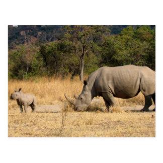 Carte postale de famille de rhinocéros