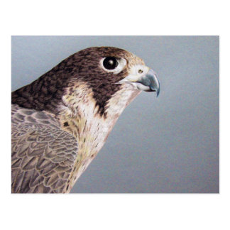 Carte postale de faucon pérégrin