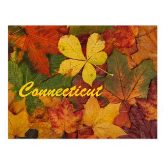 Carte postale de feuille d'automne du Connecticut