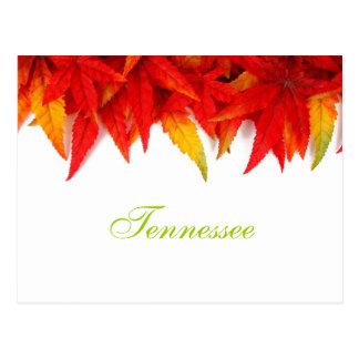 Carte postale de feuille d'automne du Tennessee