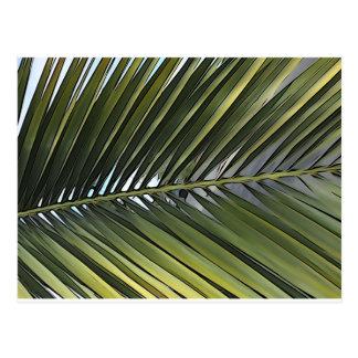 Carte postale de feuille de palmier