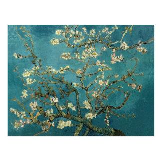 Carte postale de fleur d'amande