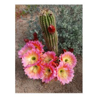 Carte postale de fleur de cactus