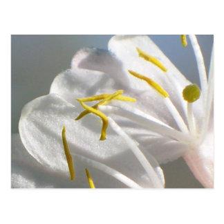 Carte postale de fleur de chèvrefeuille