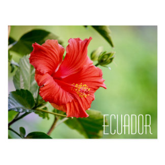 Carte postale de fleur de ketmie de l'Equateur