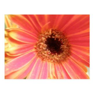 Carte postale de fleur de marguerite de Gerbera