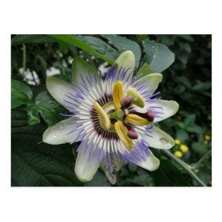 Carte postale de fleur de passion