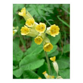carte postale de fleur de primevère