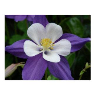 Carte postale de fleur pourpre et blanche de