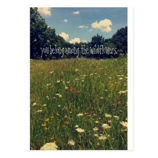 Carte postale de fleur sauvage