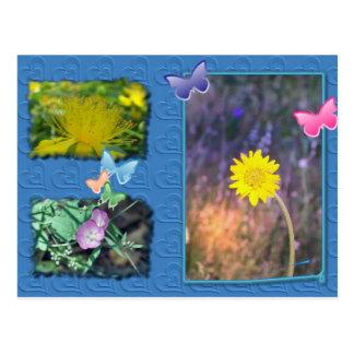 Carte postale de fleur sauvage de la Californie
