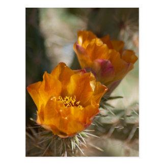 Carte postale de fleurs de cactus de Staghorn