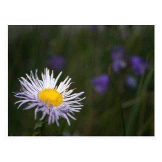 Carte postale de fleurs sauvages de montagne