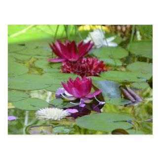 Carte postale de flottement de Lotus