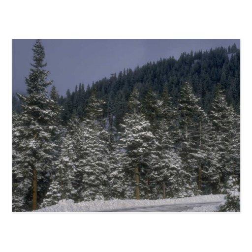 Carte postale de forêt d'hiver