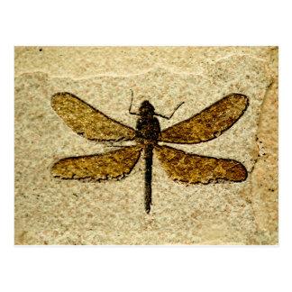 Carte postale de fossile de libellule