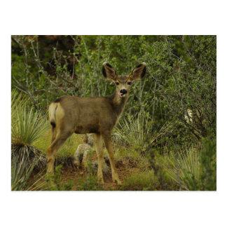 Carte postale de framboise de cerfs communs de
