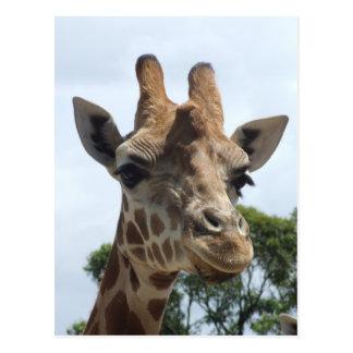 Carte postale de girafe