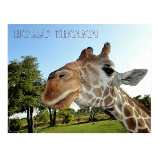 Carte postale de girafe/bonjour là !