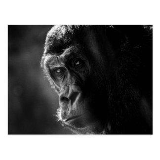 Carte postale de gorille de mère