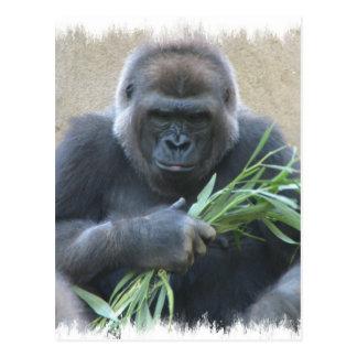 Carte postale de gorille de Silverback