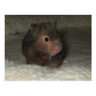 Carte postale de hamster