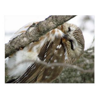 Carte postale de hibou de neige