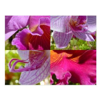 Carte postale de jardins botaniques de cairns