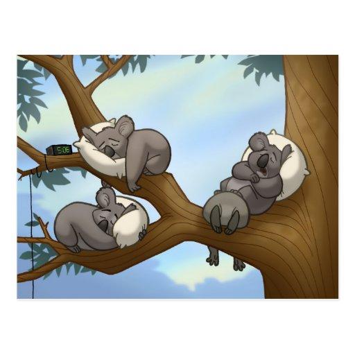 Carte postale de koala de sommeil