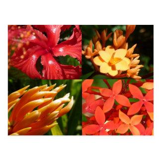 """Carte postale """"de la chaleur tropicale"""""""
