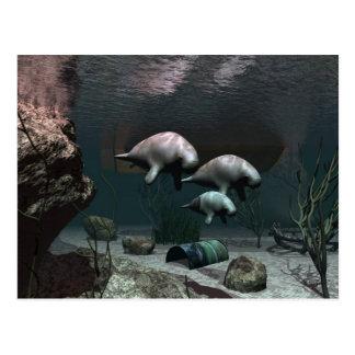 Carte postale de lamantin