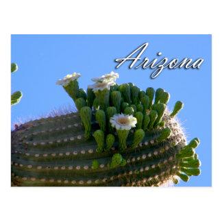 Carte postale de l'Arizona, cactus de Saguaro