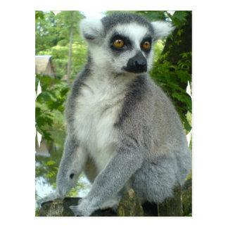 Carte postale de lémur du Madagascar