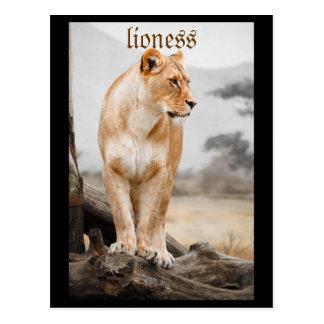 carte postale de lionne