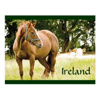 Carte postale de l'Irlande (cheval dans le domaine